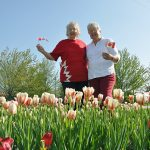 Creemore celebrates blooming of Canada 150 tulips