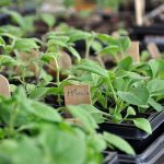 Hort Society hosts seed-planting workshop