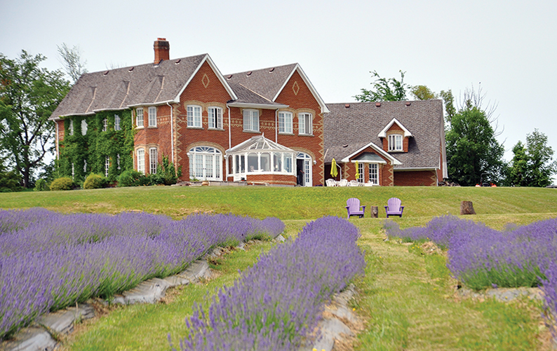 Purple Hill Lavender Farm, a Greasley family venture – The