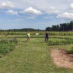Community garden receives Huronia Foundation Grant