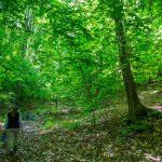 Creemore Nature Preserve closed for trail maintenance Sept. 13-17
